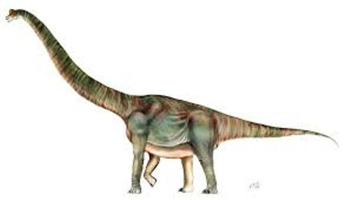 Brachiosaurus Facts
