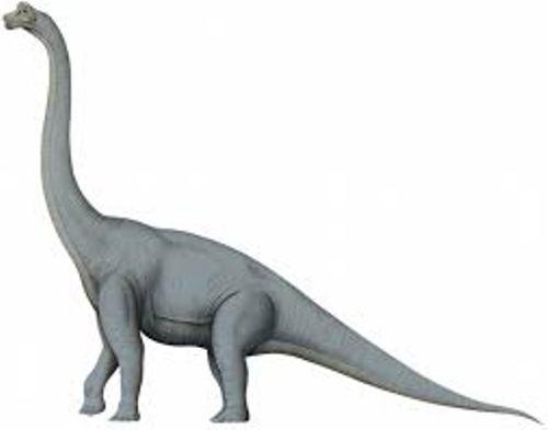 Brachiosaurus Pic