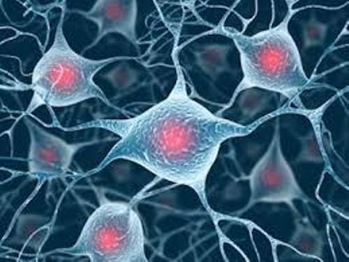 Brain Cells Images