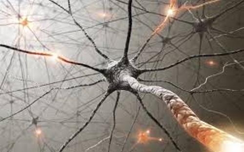 Brain Cells Picture