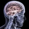 10 Facts about Brain Injury