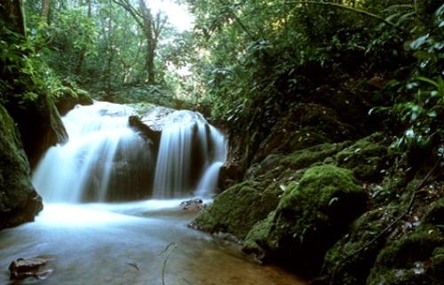 Brazil Rainforest Beauty