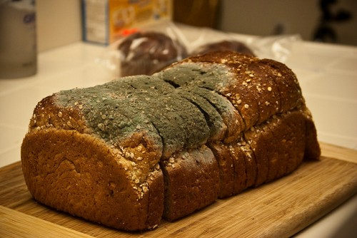 Bread Mold Image