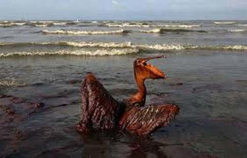 Facts about BP Oil Spill