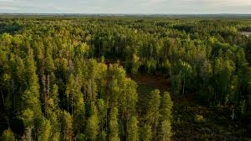 Facts about Boreal Forest