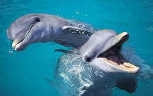 Facts about Bottlenose Dolphins