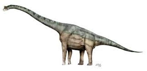 Facts about Brachiosaurus
