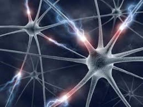 Facts about Brain Cells