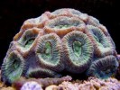 10 Facts about Brain Coral