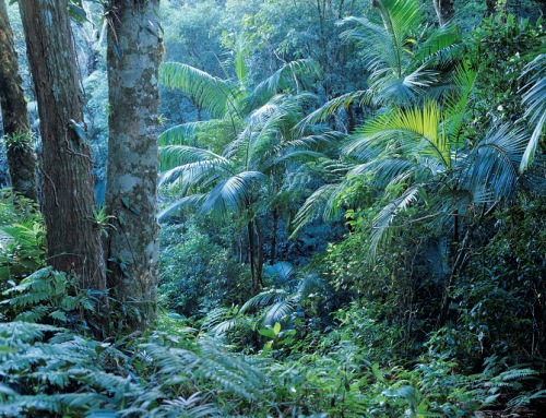 Facts about Brazil Rainforest