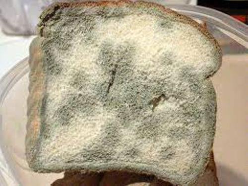 Facts about Bread Mold