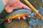 10 Facts about Brook Trout