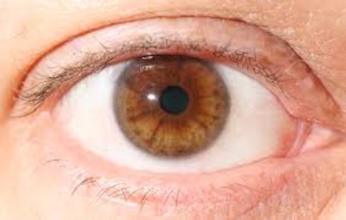 Brown Eyes Colors