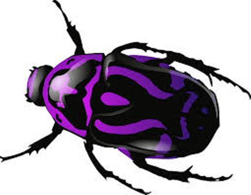 Bugs Color