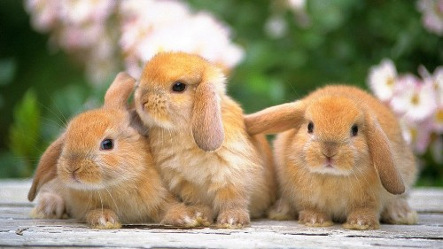 Bunnies Picture