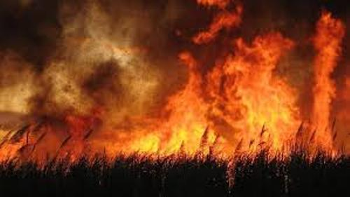 10 facts about bushfires