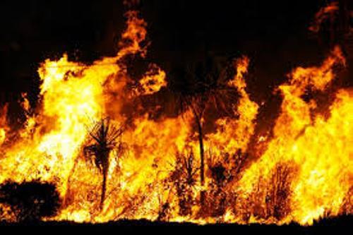Bushfires Facts