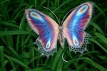 10 Facts about Butterflies