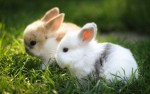 10 Facts about Bunnies