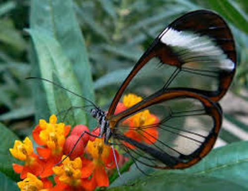Facts about Butterflies