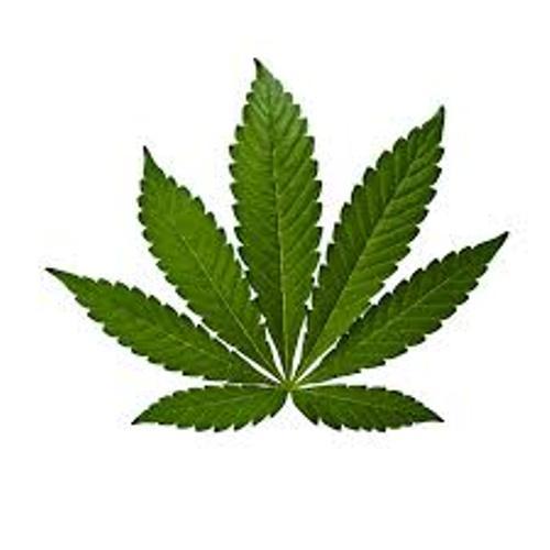 Cannabis Pic