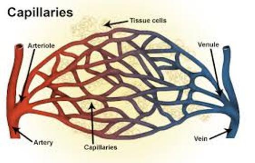Capillaries Pic