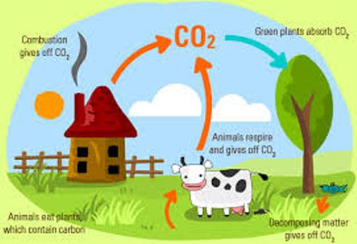 Carbon Cycle Facts