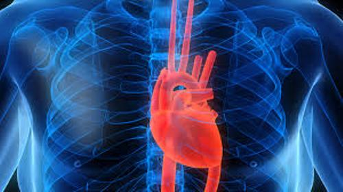 Cardiovascular System Facts