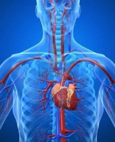 Cardiovascular System Picture
