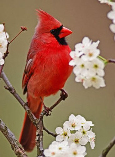 Facts about Cardinals