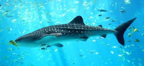 Cartilaginous Fish Image