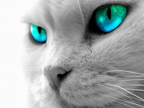 Cat's Eyes Pic