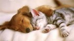 10 Facts about Cats and Dogs