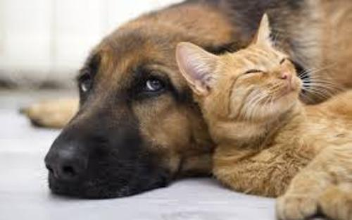 Cats and Dogs Pic