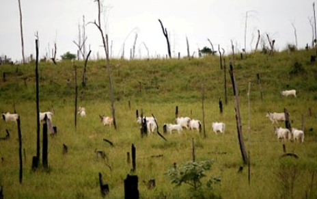 Cattle Ranching Deforestation Facts