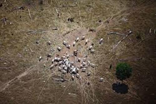 Cattle Ranching Deforestation Picture