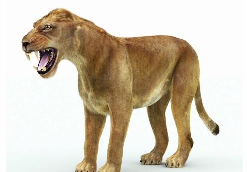 Cave Lion Pic