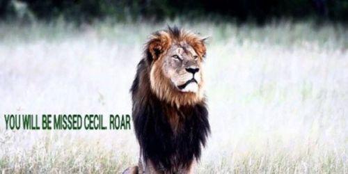 Cecil The Lion Image