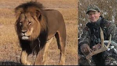 Cecil The Lion Pic