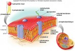 10 Facts about Cell Membrane