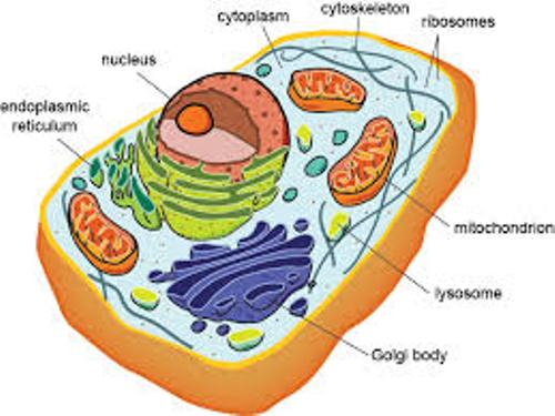 Cell Structure and Function facts