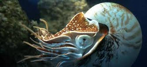 Cephalopod Facts