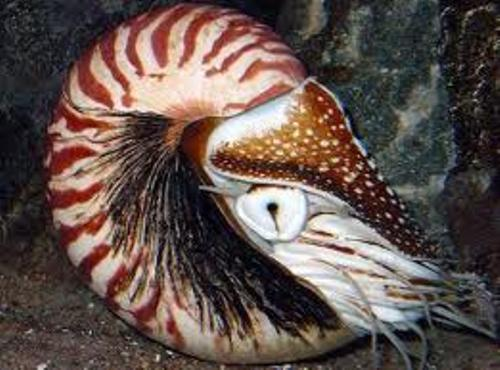 Cephalopods Facts
