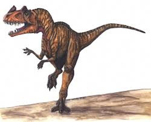 Ceratosaurus Pic