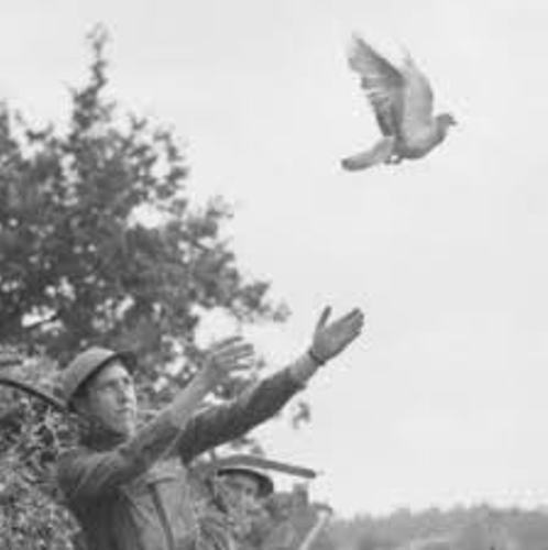 Facts about Carrier Pigeons