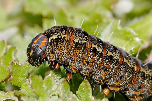 Facts about Caterpillars