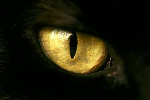 Facts about Cat's Eyes