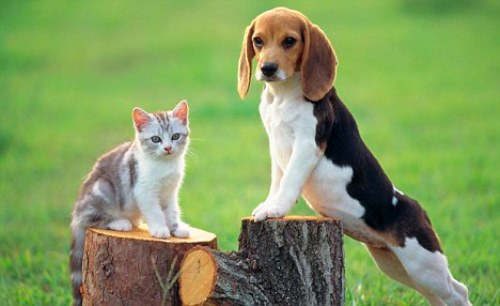 Facts about Cats and Dogs