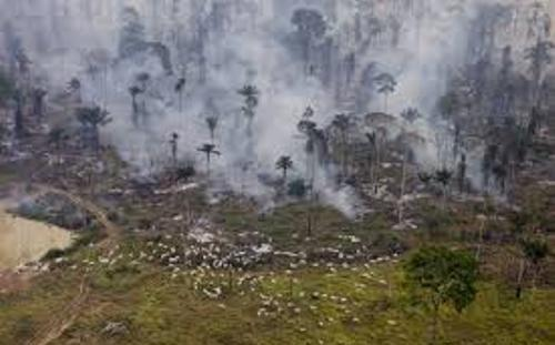 Facts about Cattle Ranching Deforestation