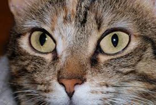 Unique Cat's Eyes